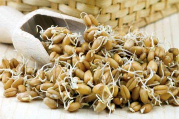 Пшеница пророщенная: польза и вред, свойства