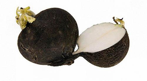 Салат из черной редьки с яблоком и соком лайма