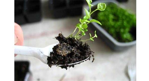 Как вырастить лобелию из семян: красивый цветок требует сил и времени