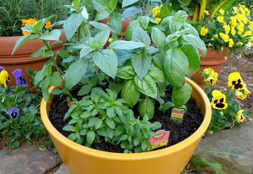 8 лекарственных растений, которые отгонят комаров от вашего участка…