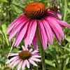 7 растений, которые избавят от зимних простуд