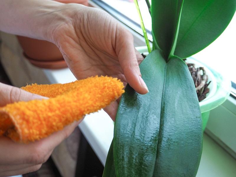 Как пересадить орхидею во время цветения