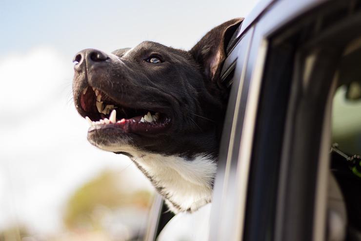 7 советов путешественникам с собаками