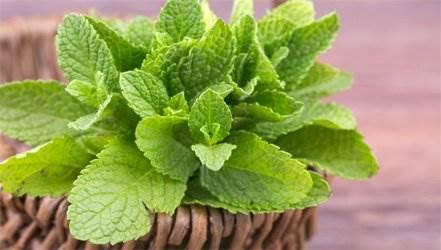 10 ароматных растений, которые можно выращивать у себя на подоконнике ( 4 фото )