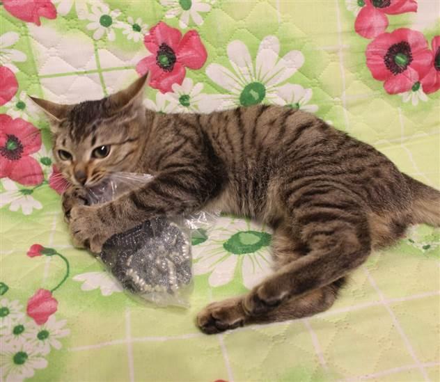 Поздним вечером по улице бродил тощий кот, а навстречу ему шла его спасительница ( 2 фото )