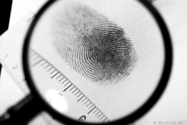 Почему у нас есть отпечатки пальцев?