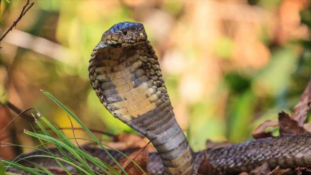 Виноваты змеи: найден источник китайского коронавируса