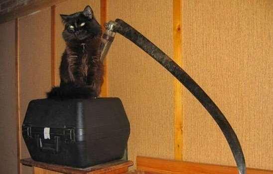 В Архангельске домашняя кошка 2 дня держала свою хозяйку в заложниках