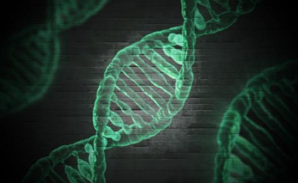 Как проводиться процедура теста ДНК