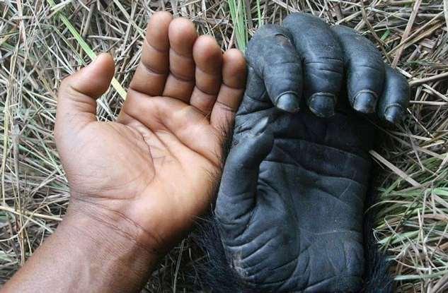 Почему у человека именно по пять пальцев на руках и ногах?
