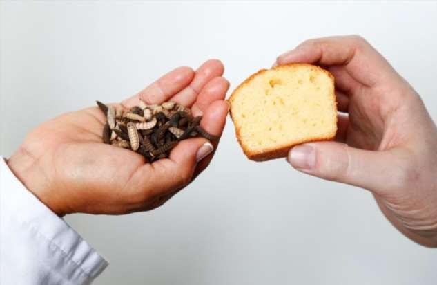 Ученые приготовили кекс из «масла» насекомых. Говорят, вкусно