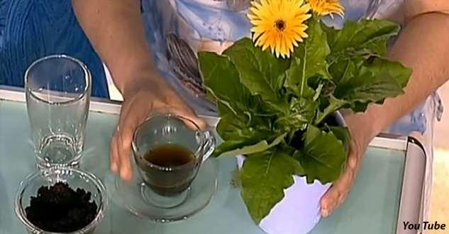 5 лучших натуральных удобрений для комнатных растений — будут расти как никогда