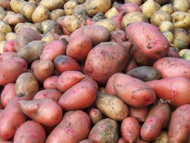 Чем отличаются розовый и белый картофель: что подойдет для жарки, а что – для пюре
