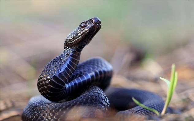 🐍 В Подмосковье проснулись змеи