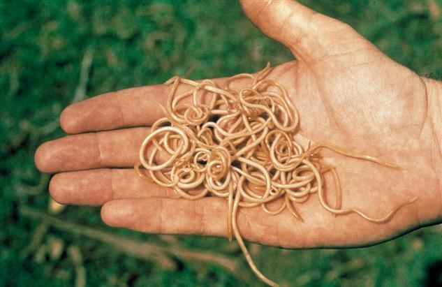 Как быстро узнать есть ли в вашем организме паразиты
