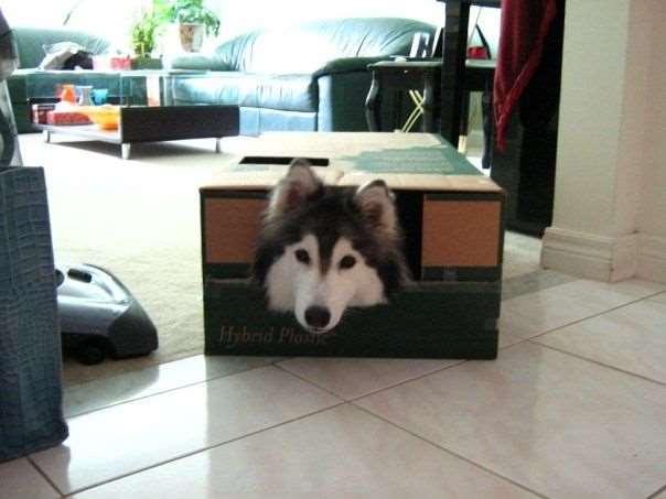 Как ведет себя собака, воспитанная кошками?: Хозяева удивились повадкам своего нового питомца
