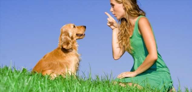 Учёными доказана способность собак понимать речь человека