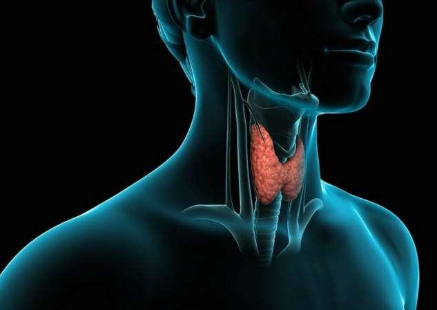 Что нужно для здоровья щитовидной железы?