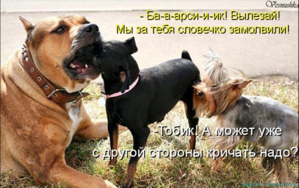 Прикольные животные. Подборка для женщин и девушек №krashevseh-ani-13081027062020