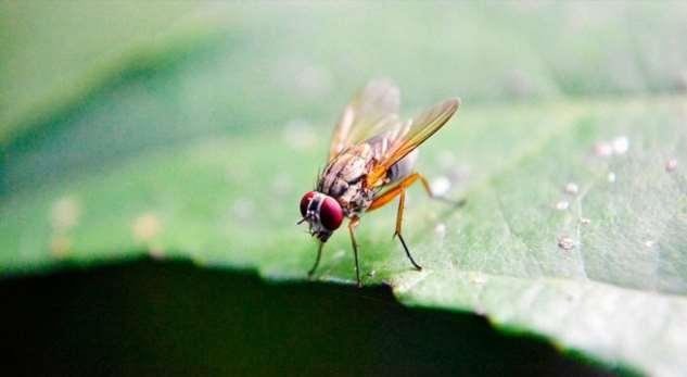 Как быстро избавиться от надоедливых насекомых