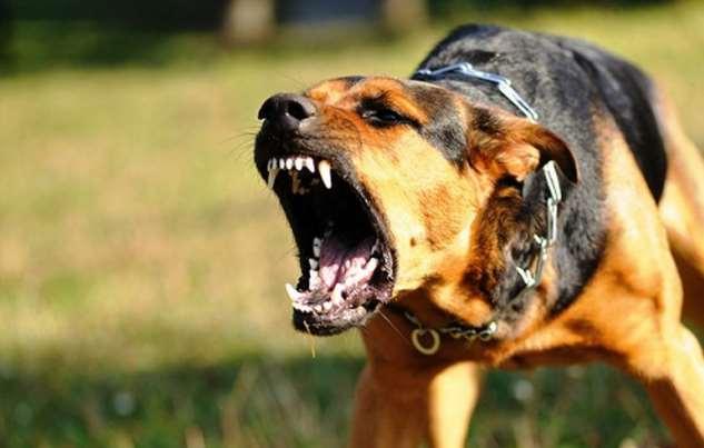 Притча на ночь: Как не бояться собак