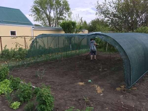 Как спасти огород от жары