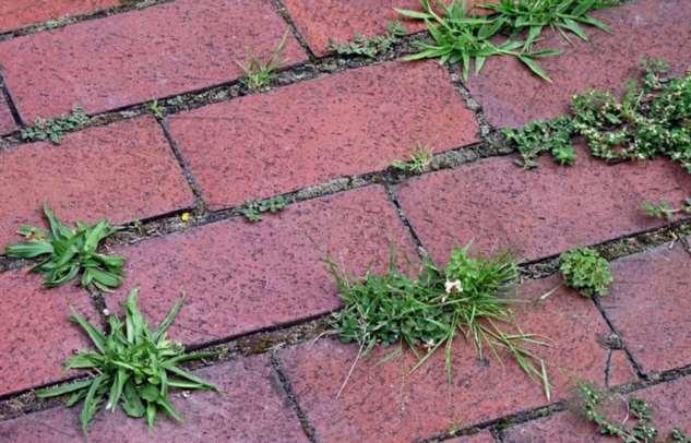 Проверенный копеечный способ, который позволит избавиться от травы между плиткой