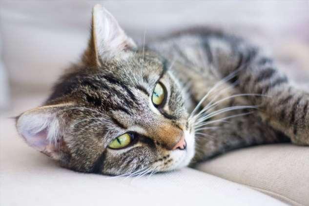 Признаки старения кошки и как за ней ухаживать