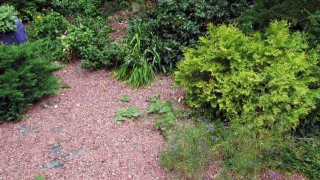 Как избавиться от сорняков на клумбе с гарантией 50 лет
