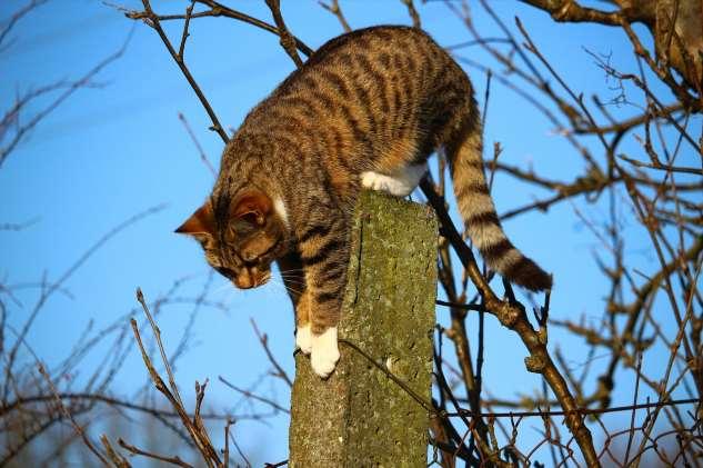 Почему коты уходят из дома