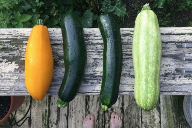 Полезный овощ-ягода: все о кабачке