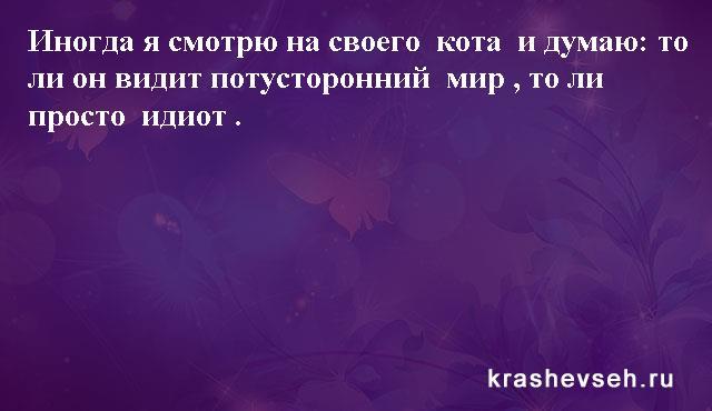 Красивые статусы. Статусы в картинках. Подборка №krashevseh-status-47470420072020