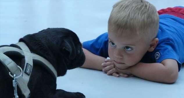 Дети и собаки: десять научных правил