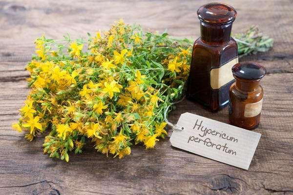Зверобой продырявленный — трава от 99 болезней. Полезные свойства и противопоказания