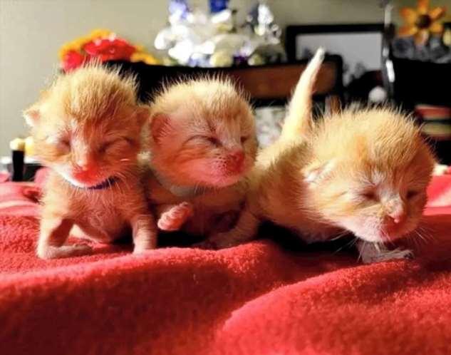 Троицу рыжих котят спасли от опасности и бездомности, с тех пор они друг за друга горой