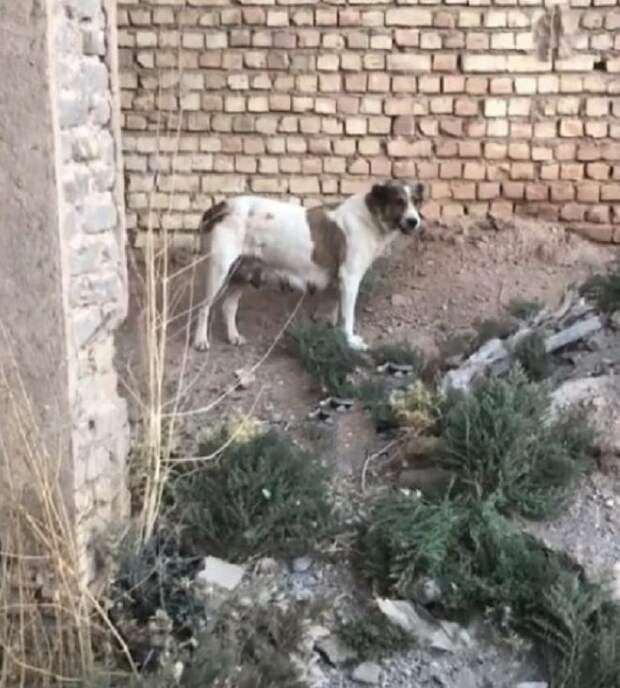 Лающая  собака, просила спасти своего щенка, застрявшего в банке