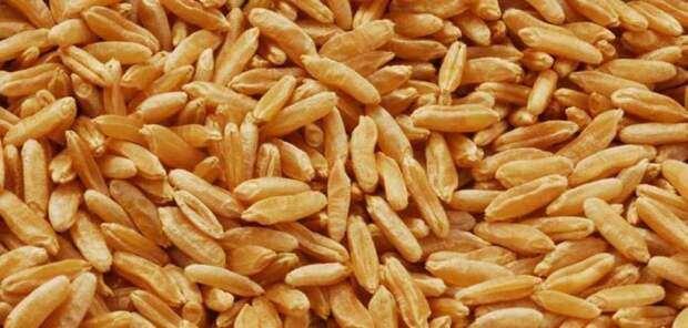 """Медики назвали """"древнее зерно"""", очищающее кровь от сахара и холестерина"""