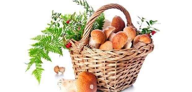 Заметка грибникам — как правильно чистить грибы
