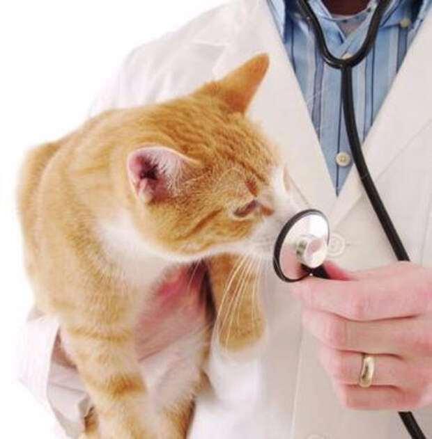 Мифы о стерилизации домашних животных