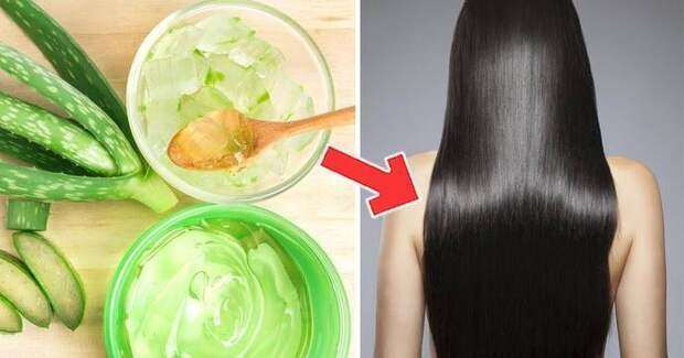 Использование сока алоэ при выпадении волос