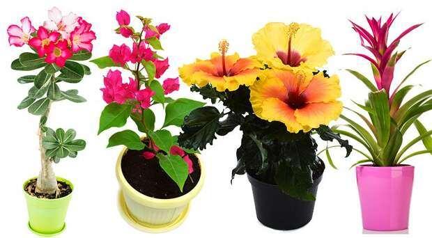 Красивоцветущие комнатные растения для южных окон: полный список