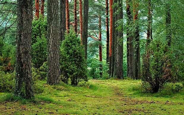 Японская философия синрин-йоку: принятие «лесной ванны»